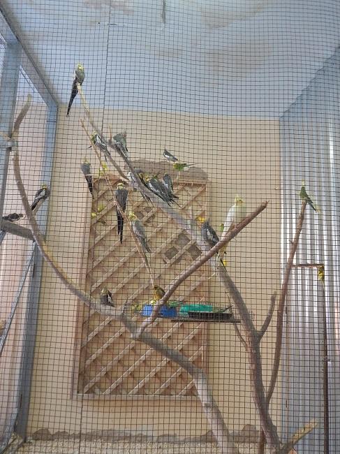 Экзотические птицы греются в теплых закрытых помещениях
