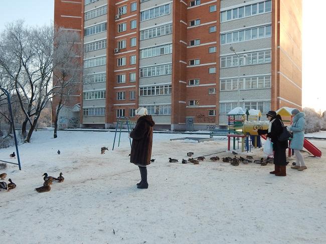 А уток жители Московского проспекта подкармливают с удовольствием