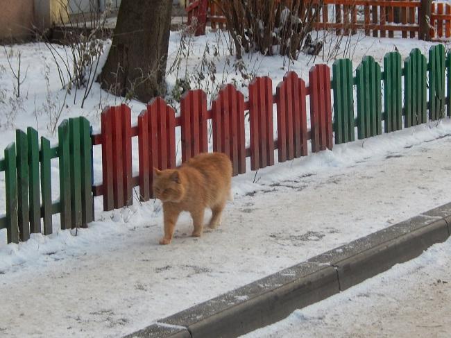 Тяжело приходится в мороз уличным животным