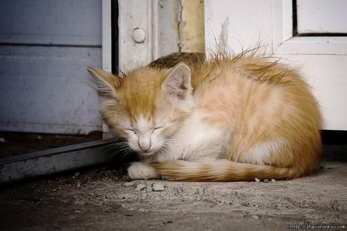 Фото брошенный котенок