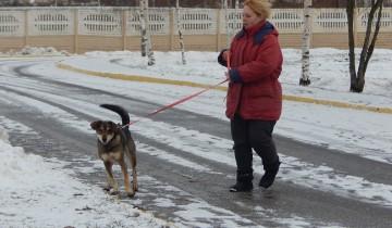 приют для бездомных животных, Витебск