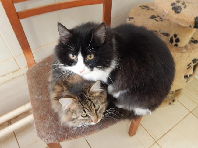 Два неразлучных брата. Фото Евгении Москвиной