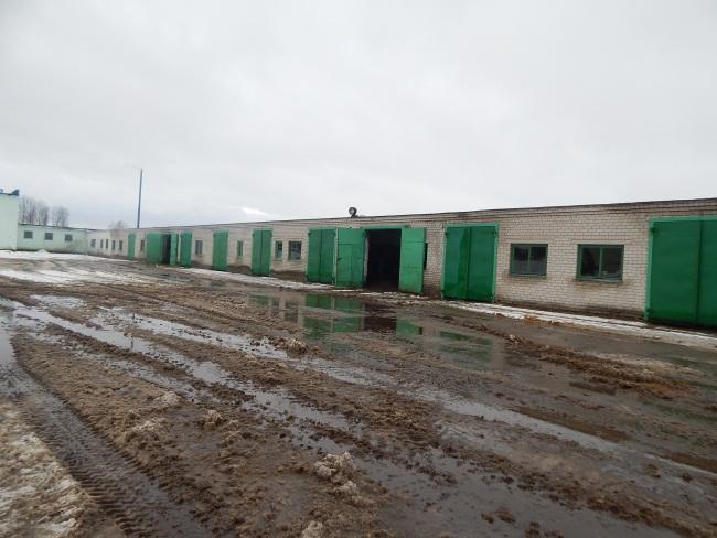 ферма в Тулово