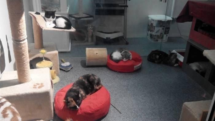 Вот в таких условиях содержаться бездомные кошки в Вильнюсе. Фото Анастасии Вереск