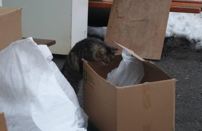 Бездомному нелегко выжить на улице, даже если вы - кот