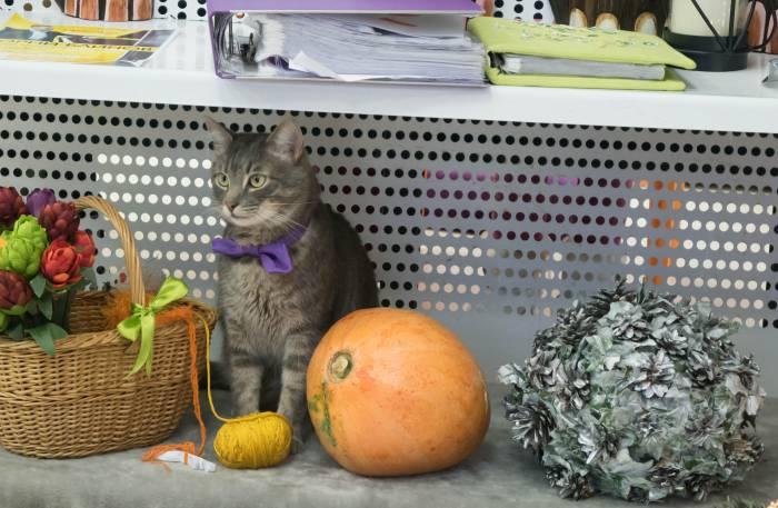Некоторые кошки не прочь и покрасоваться