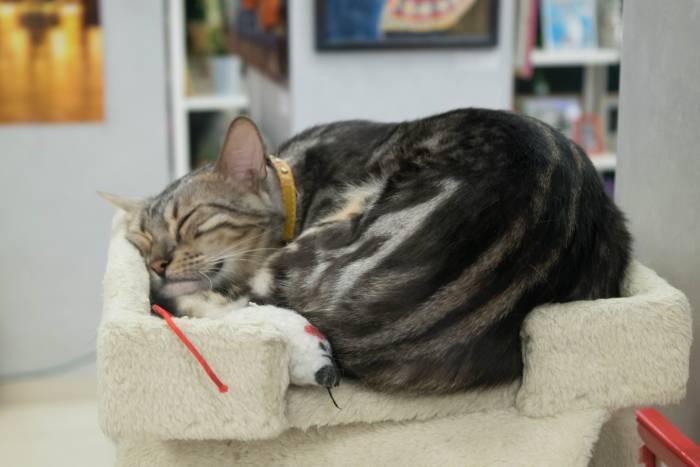 Милая кошка мраморного окраса