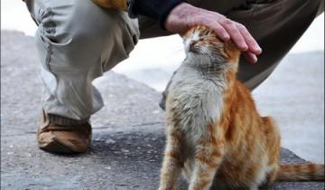 Бездомные животные так нуждаются в вашей доброте! Фото i2.wp.com