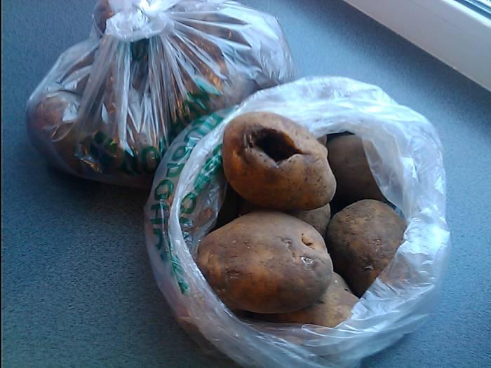 картошка 2