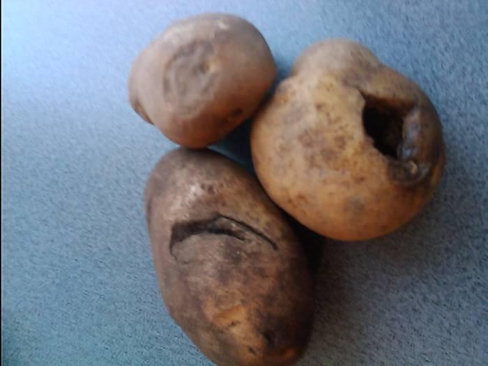 картошка 3