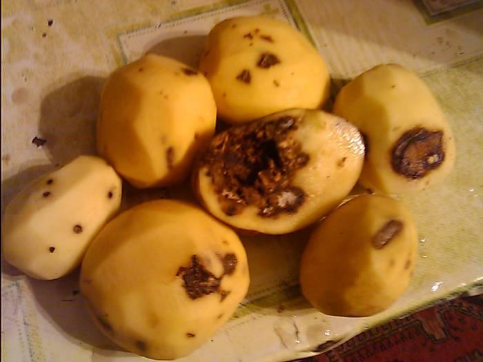 картошка 4
