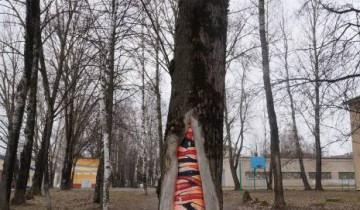 1 дерево