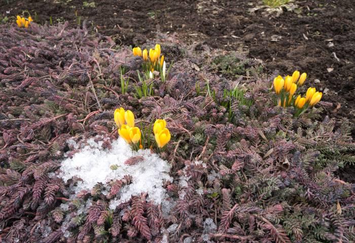 Весна не за горами! Фото Алена Евдокимова