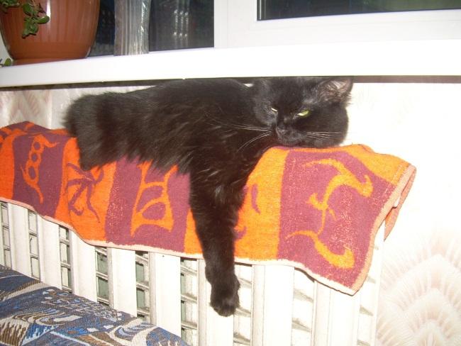 кот на батарее, Витебск, черный кот, март, холодные батареи