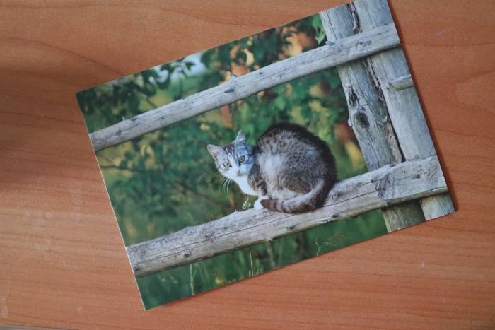Карточка для посткроссинга из белорусской серии открыток. Фото Анастасии Вереск