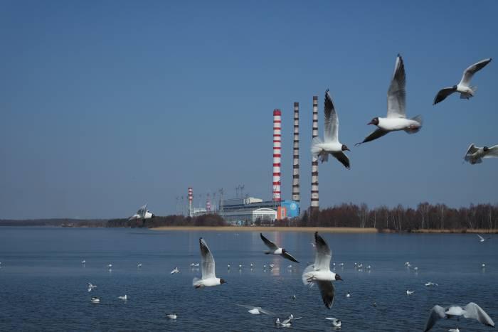 Колония чаек у берега Лукомльского озера. Фото Анастасии Вереск