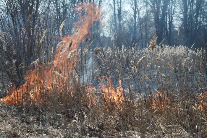 С таких мелочей начинаются страшные лесные пожары. Фото Анастасии Вереск