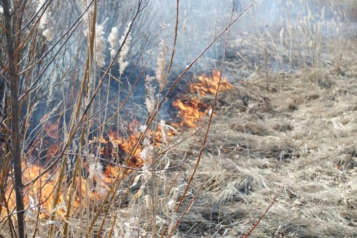 Сжигание травы в Витебской области. Фото Анастасии Вереск.