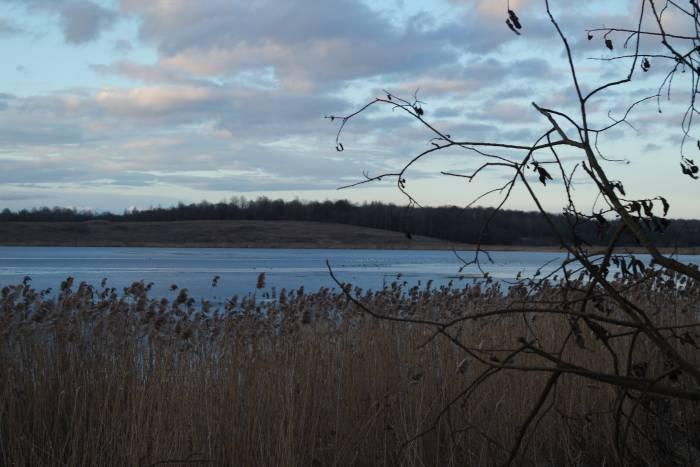 Вдалеке, на льду, находится большое скопление птиц. Жаль, что не удается рассмотреть их поближе! Фото Анастасии Вереск
