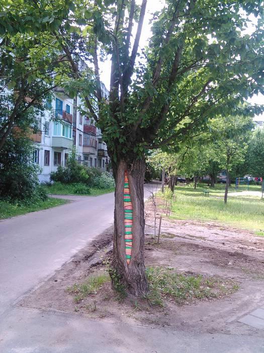 Яркие деревья радуют глаз. Фото Анастасии Вереск