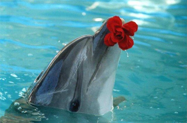 дельфин, дельфин с цветком