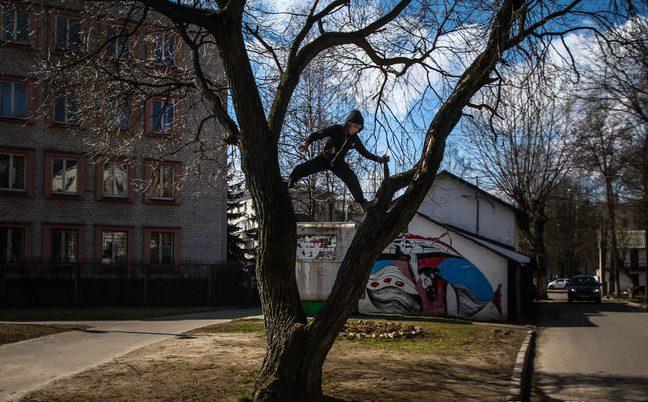 Мальчик лазает по дереву во дворе дома по улице Кирова. Фото Сергей Гудилин. nn.by