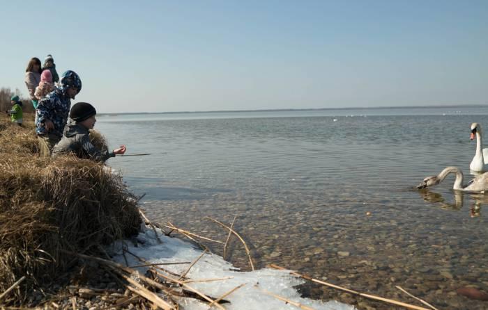 ... покормить лебедя. Фото Анастасии Вереск