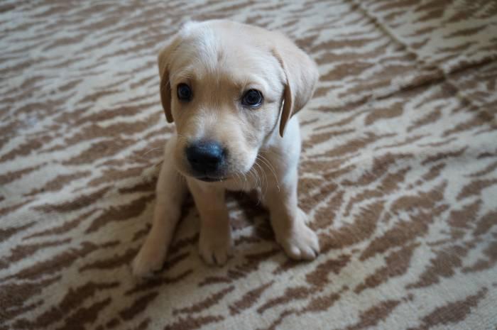 Передержка домашних животных, дело для терпеливых и добрых людей. Фото Алена Евдокимова