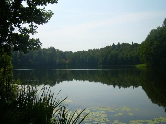 дом в аренду, лесное озеро