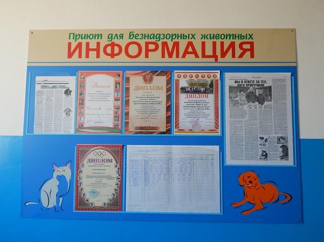 дипломы, Витебский приют для безнадзорных животных