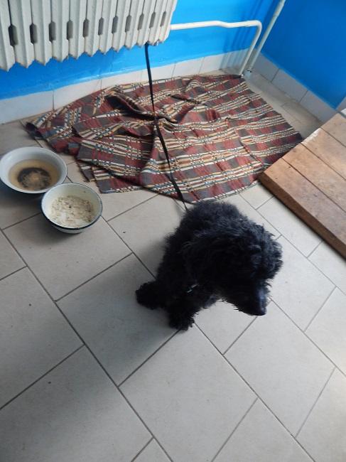 Витебский приют для безнадзорных животных, собака