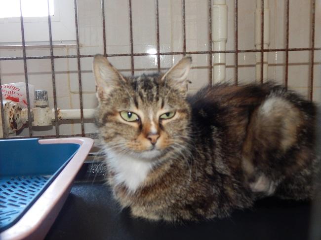 кот, Витебский приют для безнадзорных животных, карантин