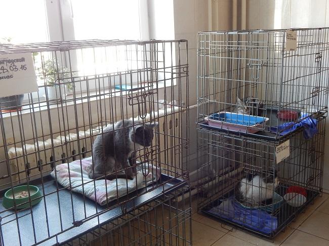 Витебский приют для безнадзорных животных, коты, карантин