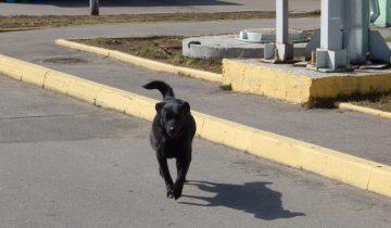 пес, приют для безнадзорных животных, Витебск
