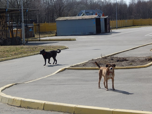 Витебский приют для безнадзорных животных, собаки