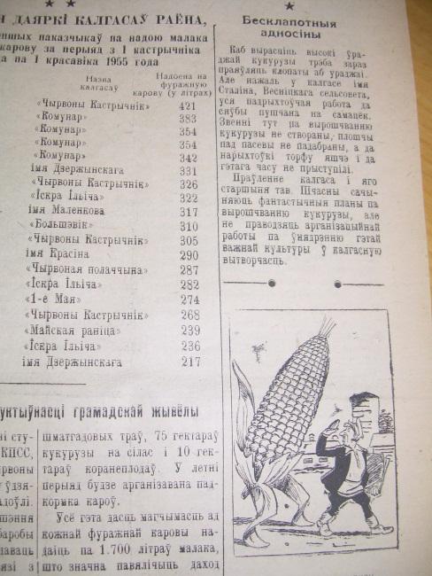 кукуруза, сельская газета, 1955 год