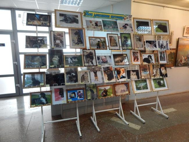 приют для животных, фотовыставка в библиотеке