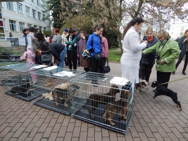 приют для животных, фотовыставка