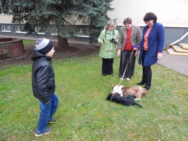приют для бездомных животных, фотовыставка