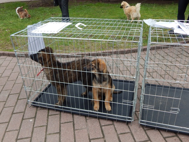 приют для бездомных животных, собаки в клетках
