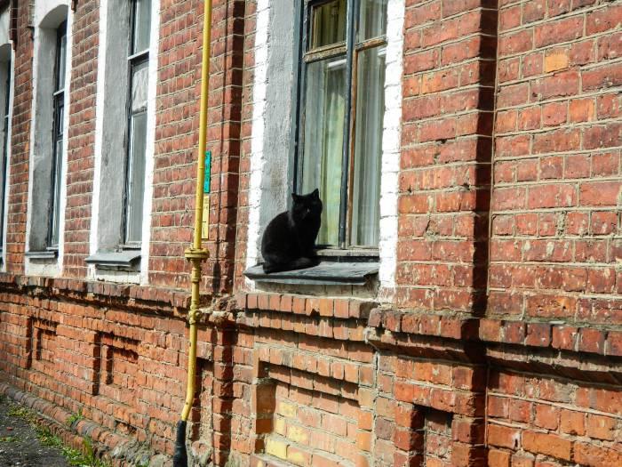 Привнесем немного позитива, ведь котики - это всегда хорошо! Фото: Катерина Соль