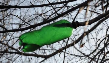 Березовый сок свободно капает с ветки прямо в сборник. Фото Анастасии Вереск