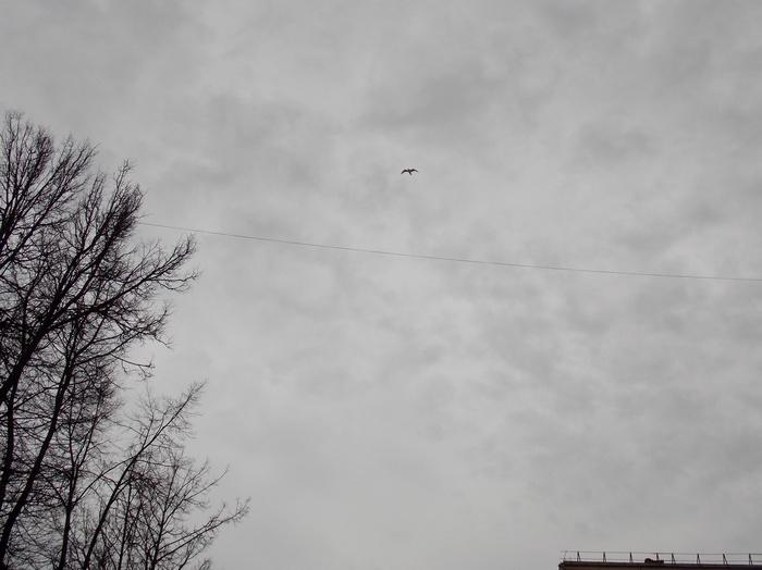 Витебск, небо, Корженевский