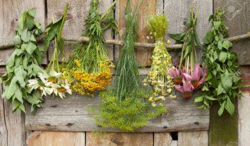лекарственые травы