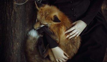 По средневековым представлениям, лиса выступала помощником ведьмы не реже, чем кот. Фото 40.media.tumblr.com