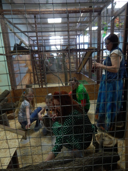 открытие контактного зоопарка, тц грин, страна енотия