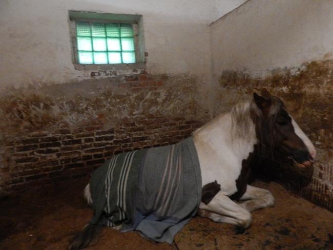 ковбой, конь, клуб калипсо