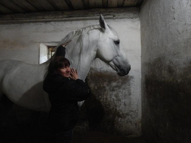 калипсо, лошадь, клуб калипсо, мазурино