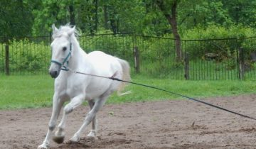 калипсо, клуб калипсо, лошадь, мазурино