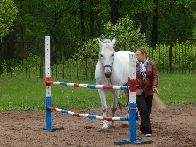 калипсо, конь, мазурино